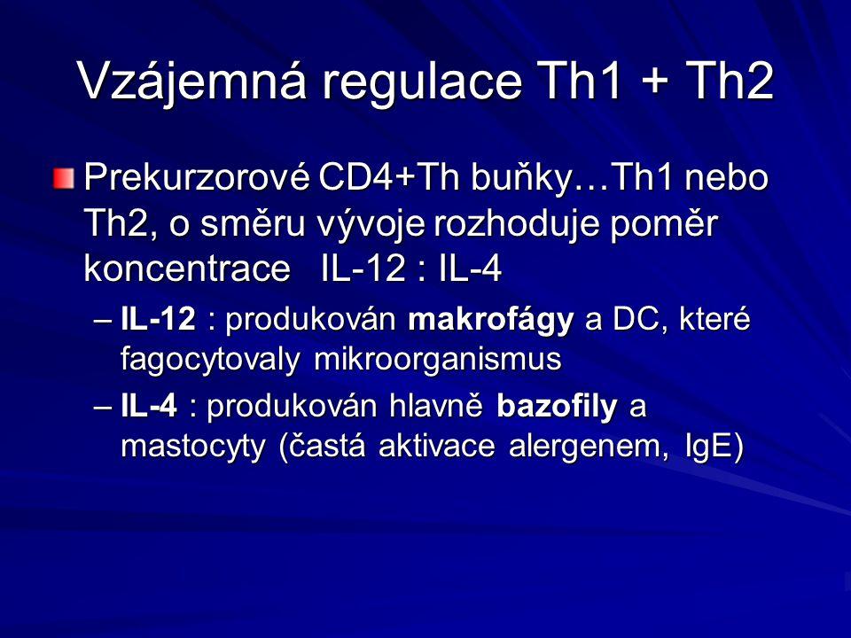 Vzájemná regulace Th1 + Th2