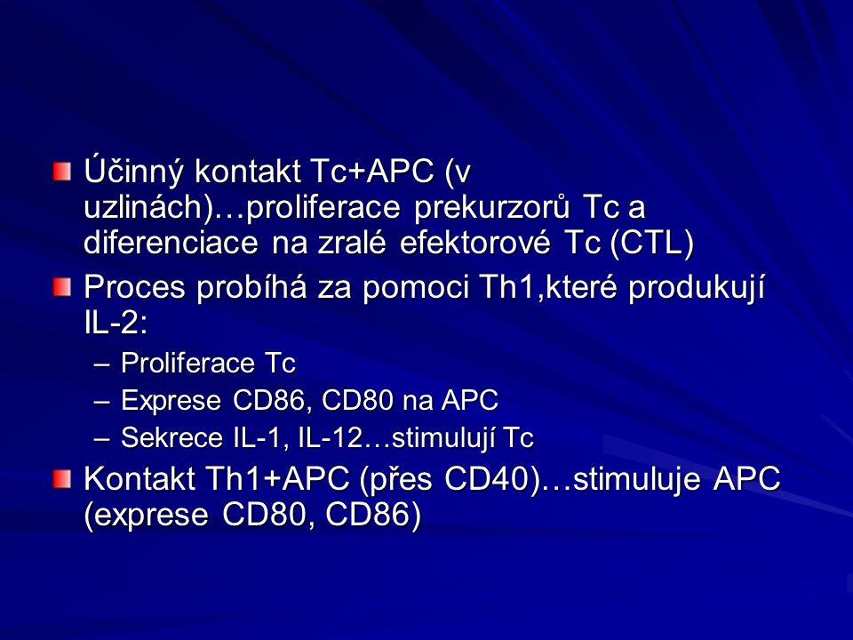 Proces probíhá za pomoci Th1,které produkují IL-2:
