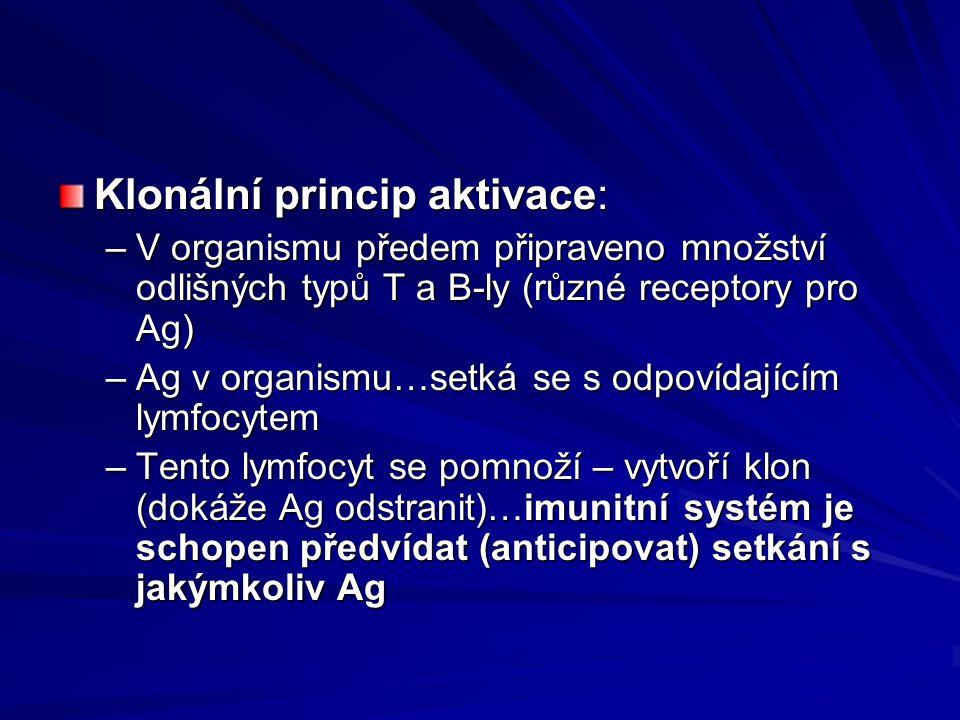 Klonální princip aktivace:
