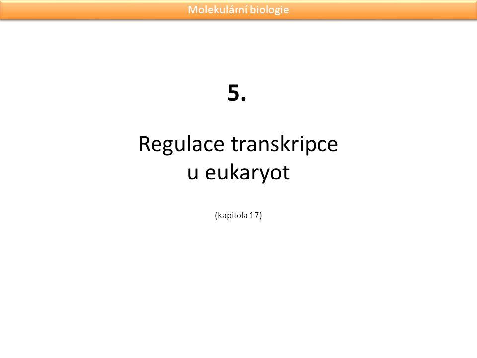 Regulace transkripce u eukaryot (kapitola 17)