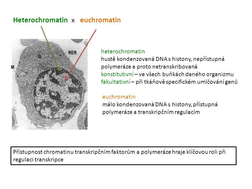 Heterochromatin x euchromatin