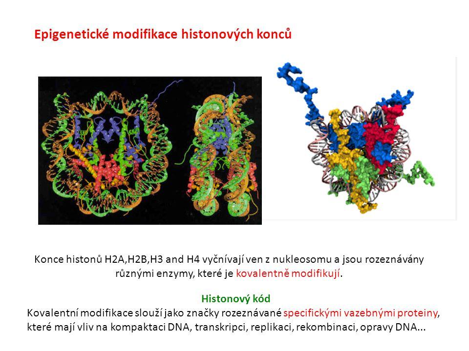 Epigenetické modifikace histonových konců