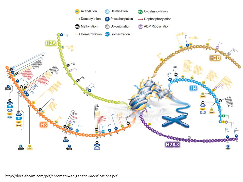 http://docs.abcam.com/pdf/chromatin/epigenetic-modifications.pdf