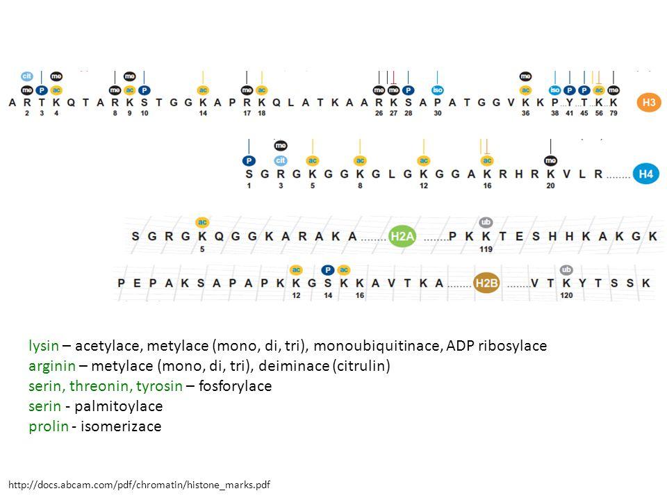 arginin – metylace (mono, di, tri), deiminace (citrulin)