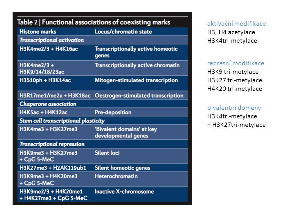 aktivační modifikace H3, H4 acetylace H3K4tri-metylace