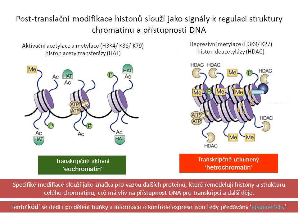 Post-translační modifikace histonů slouží jako signály k regulaci struktury chromatinu a přístupnosti DNA