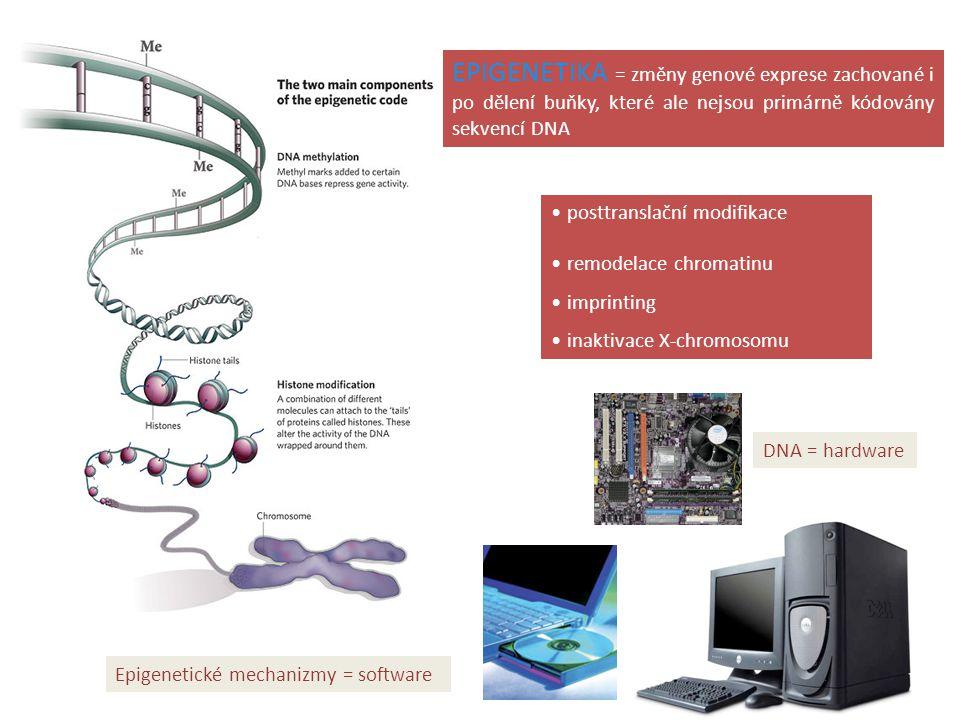 EPIGENETIKA = změny genové exprese zachované i po dělení buňky, které ale nejsou primárně kódovány sekvencí DNA
