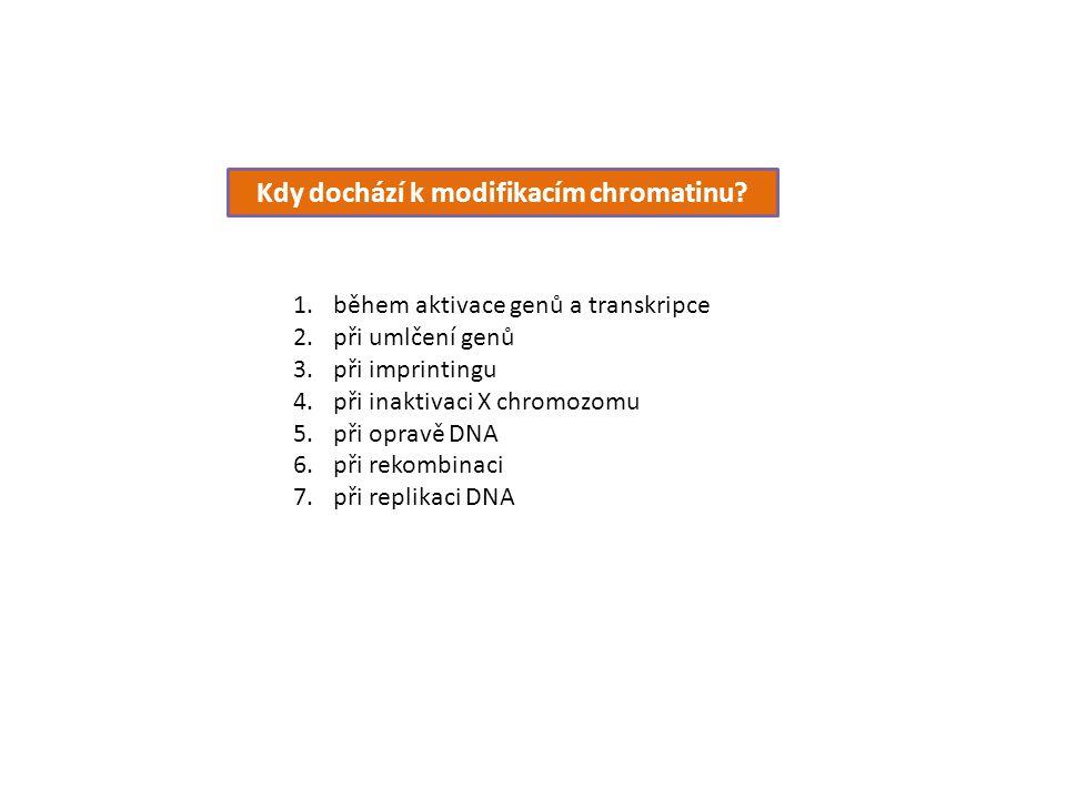 Kdy dochází k modifikacím chromatinu