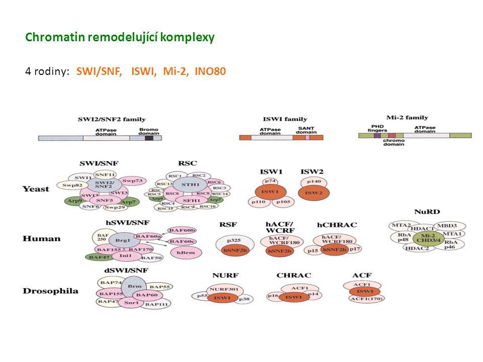 Chromatin remodelující komplexy