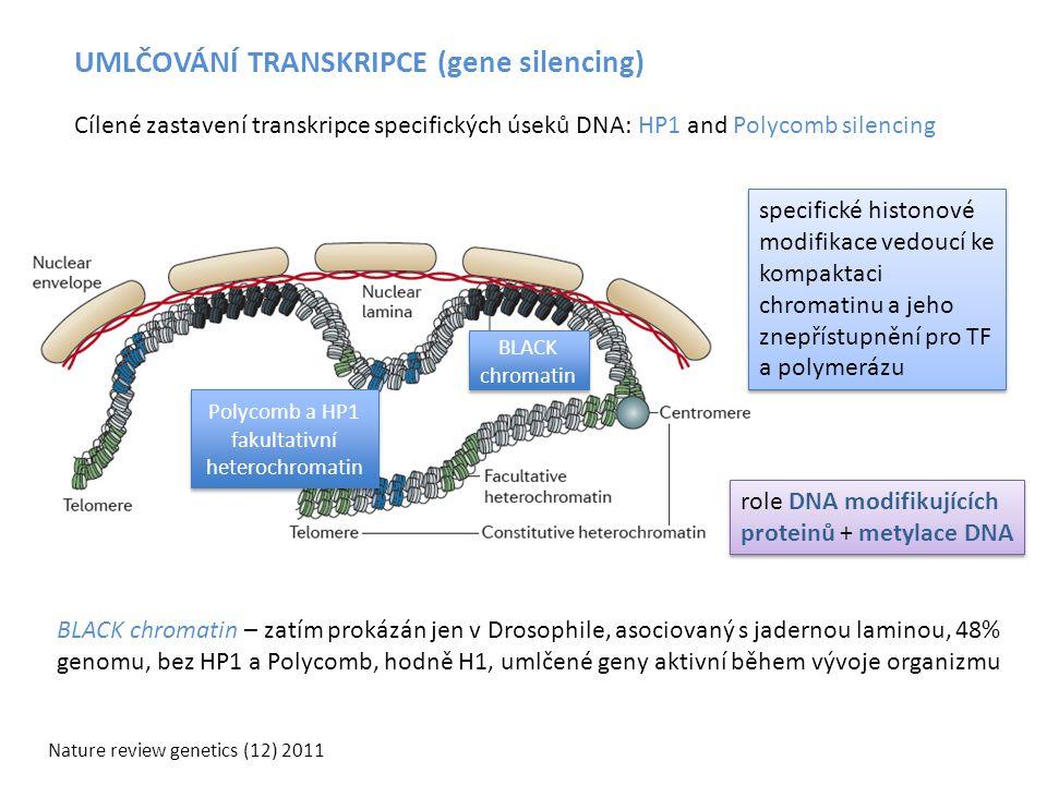 Polycomb a HP1 fakultativní heterochromatin