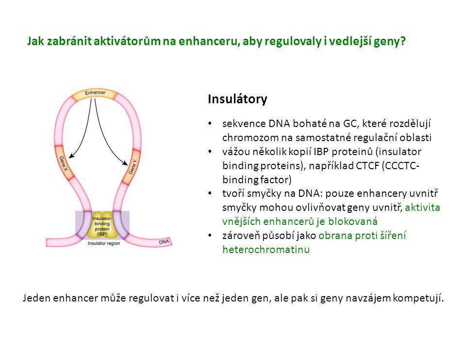 Jak zabránit aktivátorům na enhanceru, aby regulovaly i vedlejší geny
