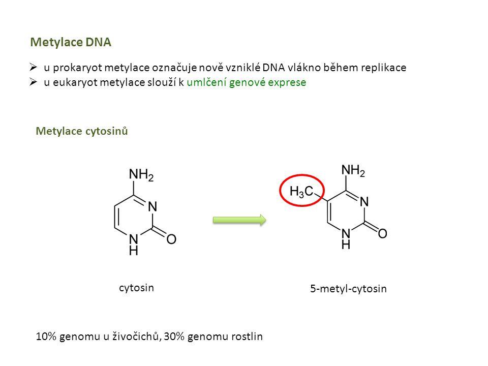 Metylace DNA u prokaryot metylace označuje nově vzniklé DNA vlákno během replikace. u eukaryot metylace slouží k umlčení genové exprese.