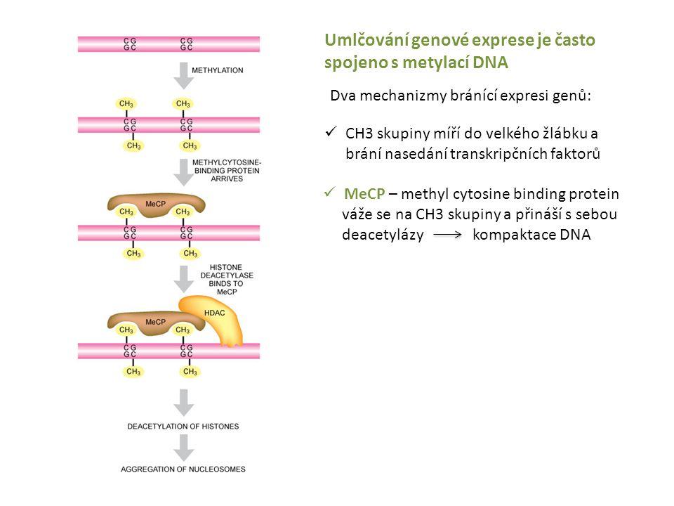 Umlčování genové exprese je často spojeno s metylací DNA