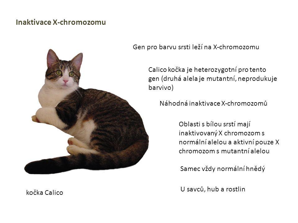 Inaktivace X-chromozomu