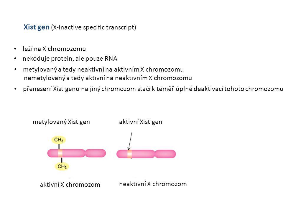 Xist gen (X-inactive specific transcript)