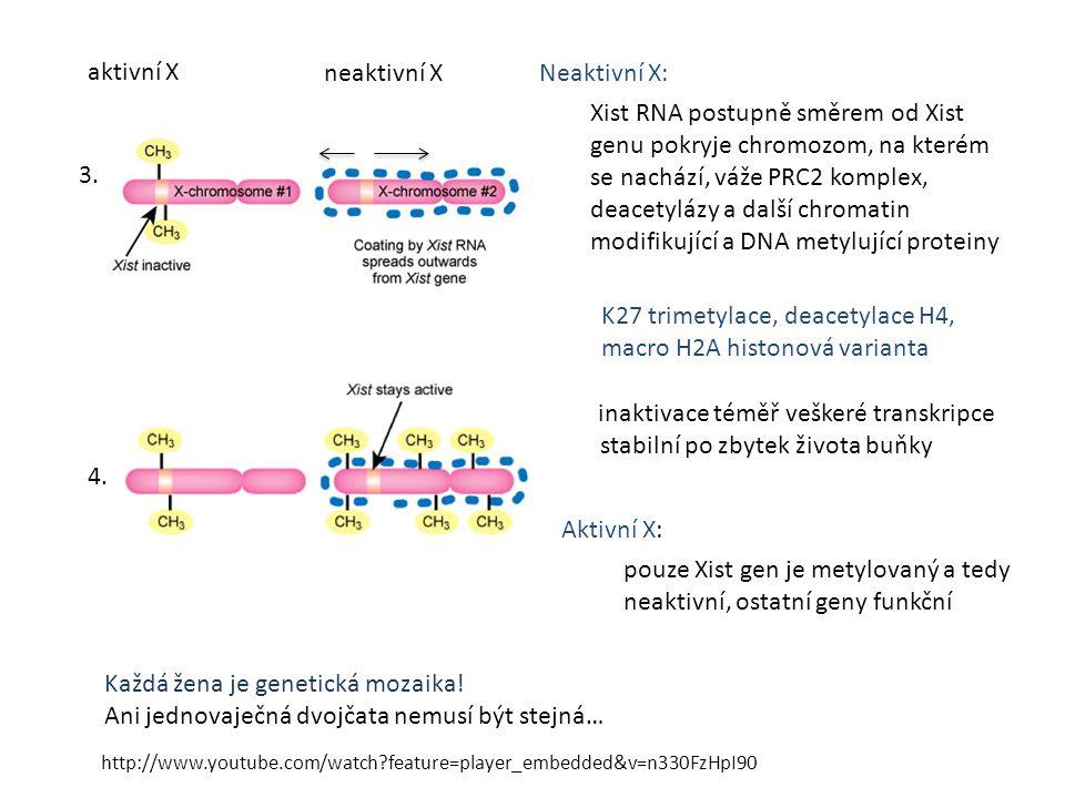 K27 trimetylace, deacetylace H4, macro H2A histonová varianta