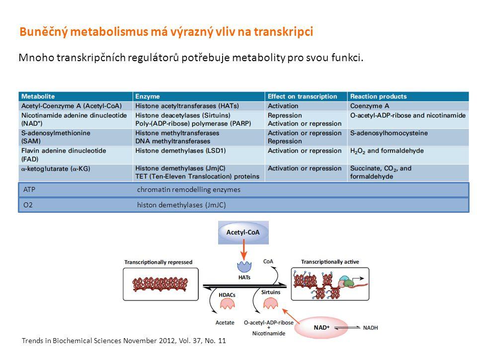 Buněčný metabolismus má výrazný vliv na transkripci