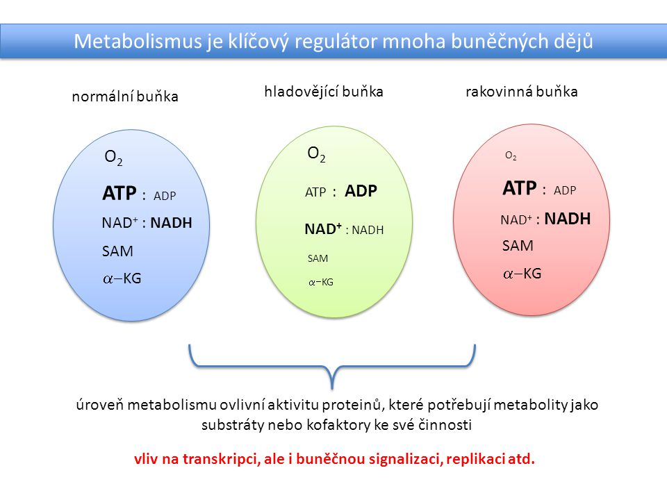 vliv na transkripci, ale i buněčnou signalizaci, replikaci atd.