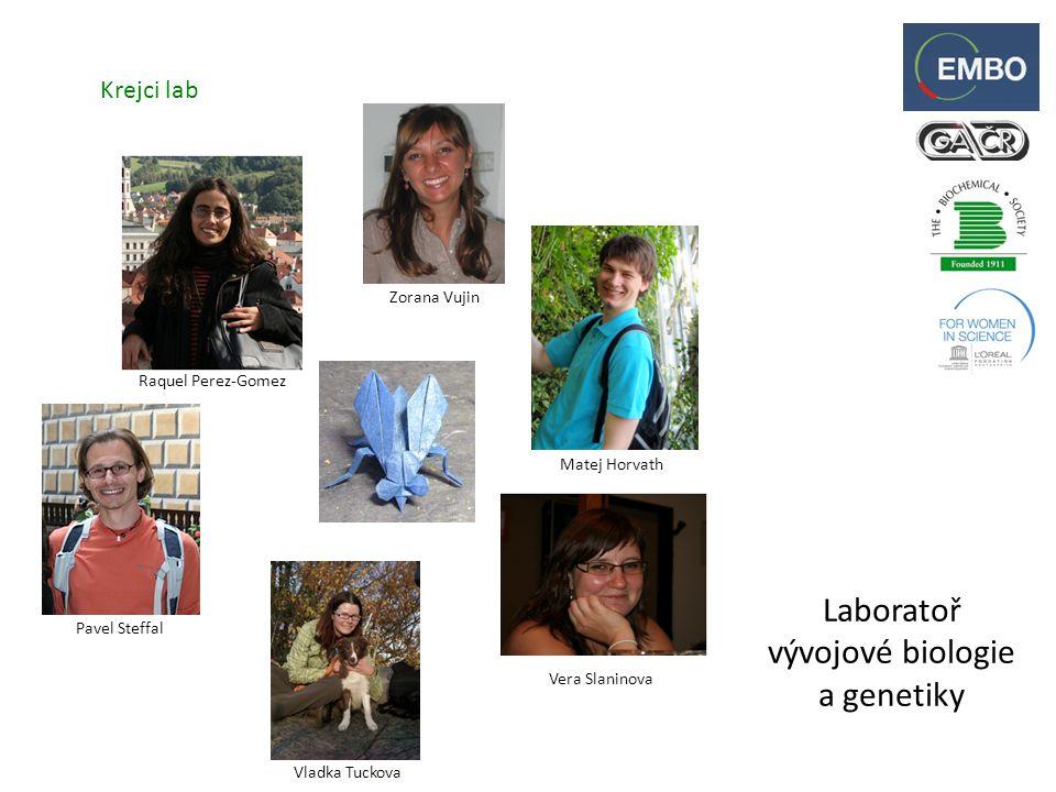 Laboratoř vývojové biologie a genetiky Krejci lab Zorana Vujin