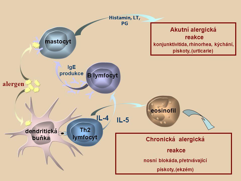 konjunktivitida, rhinorhea, kýchání, nosní blokáda, přetrvávající