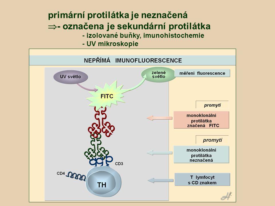 primární protilátka je neznačená - označena je sekundární protilátka
