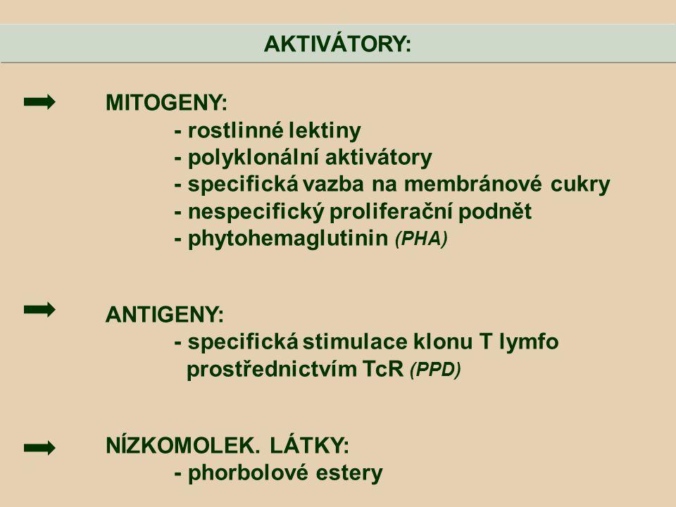 AKTIVÁTORY: MITOGENY: - rostlinné lektiny. - polyklonální aktivátory. - specifická vazba na membránové cukry.