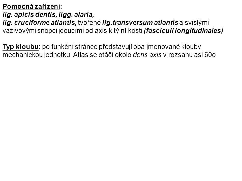 Pomocná zařízení: lig. apicis dentis, ligg. alaria,