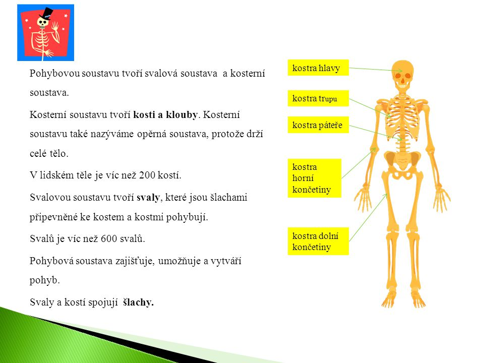 Pohybovou soustavu tvoří svalová soustava a kosterní soustava.