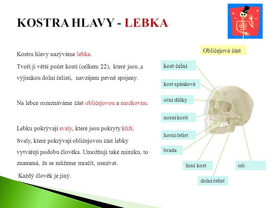 KOSTRA HLAVY - LEBKA Kostru hlavy nazýváme lebka.