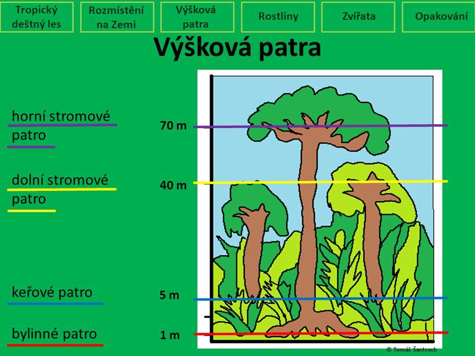 Výšková patra horní stromové patro dolní stromové patro keřové patro