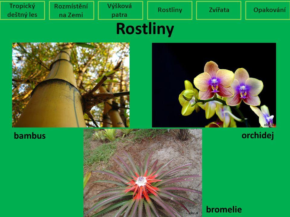 Rostliny bambus orchidej bromelie Tropický deštný les Rozmístění