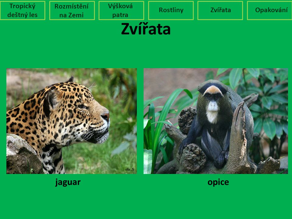 Zvířata jaguar opice Tropický deštný les Rozmístění na Zemi
