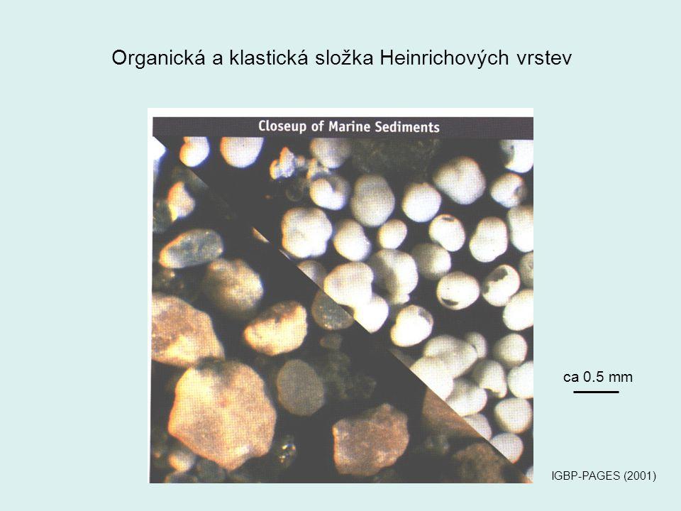 Organická a klastická složka Heinrichových vrstev