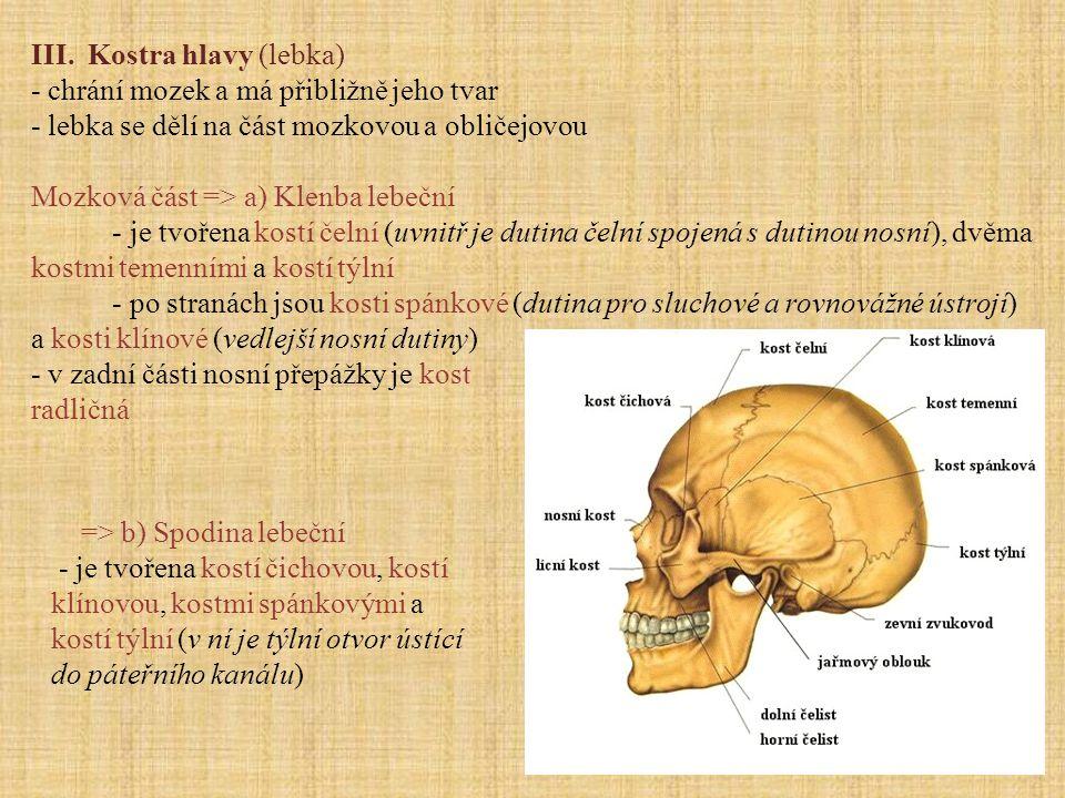 III. Kostra hlavy (lebka)
