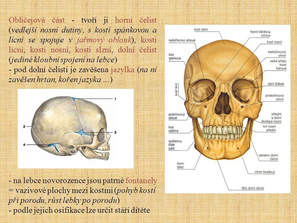 Obličejová část - tvoří ji horní čelist (vedlejší nosní dutiny, s kostí spánkovou a lícní se spojuje v jařmový oblouk), kosti lícní, kosti nosní, kosti slzní, dolní čelist (jediné kloubní spojení na lebce)