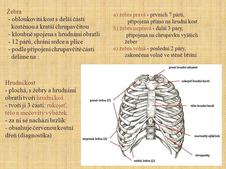 - obloukovitá kost s delší částí kostěnou a kratší chrupavčitou