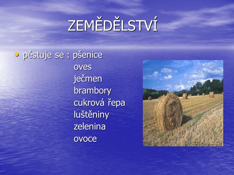 ZEMĚDĚLSTVÍ pěstuje se : pšenice oves ječmen brambory cukrová řepa