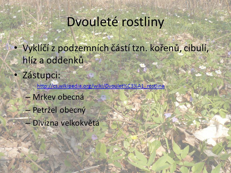 Dvouleté rostliny Vyklíčí z podzemních částí tzn. kořenů, cibulí, hlíz a oddenků. Zástupci: http://cs.wikipedia.org/wiki/Dvoulet%C3%A1_rostlina.