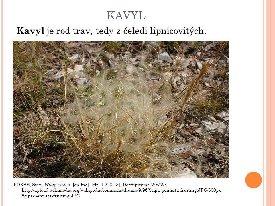 kavyl Kavyl je rod trav, tedy z čeledi lipnicovitých.