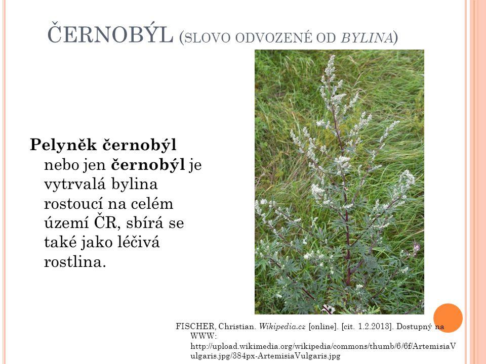 černobýl (slovo odvozené od bylina)