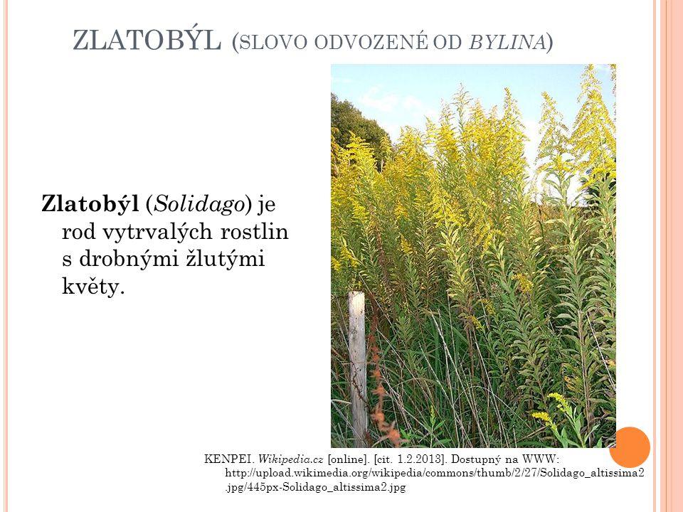 zlatobýl (slovo odvozené od bylina)