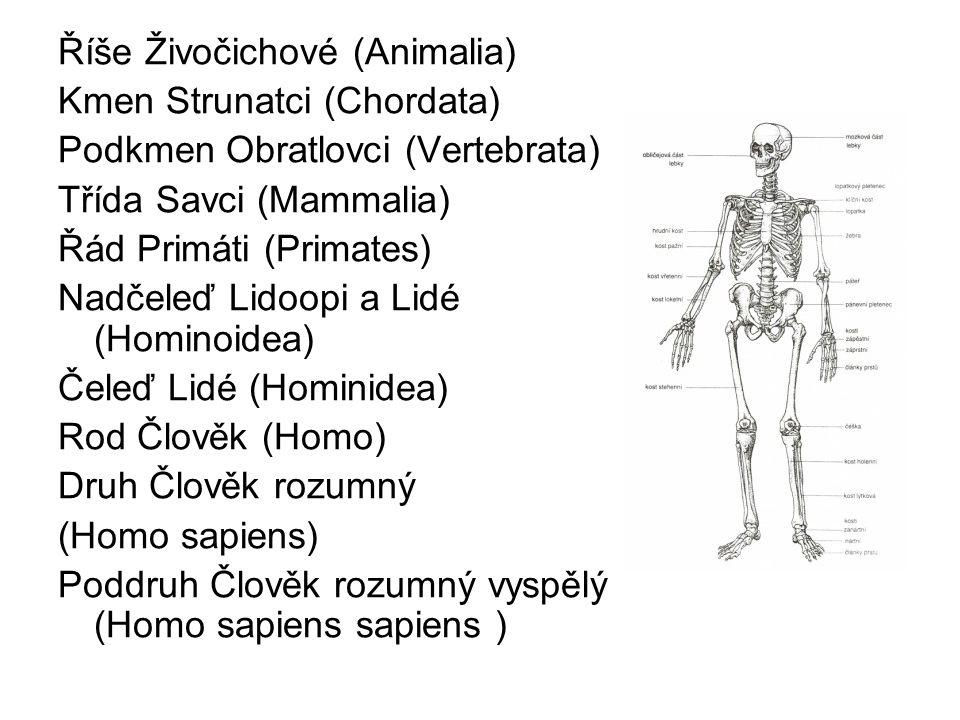 Říše Živočichové (Animalia)