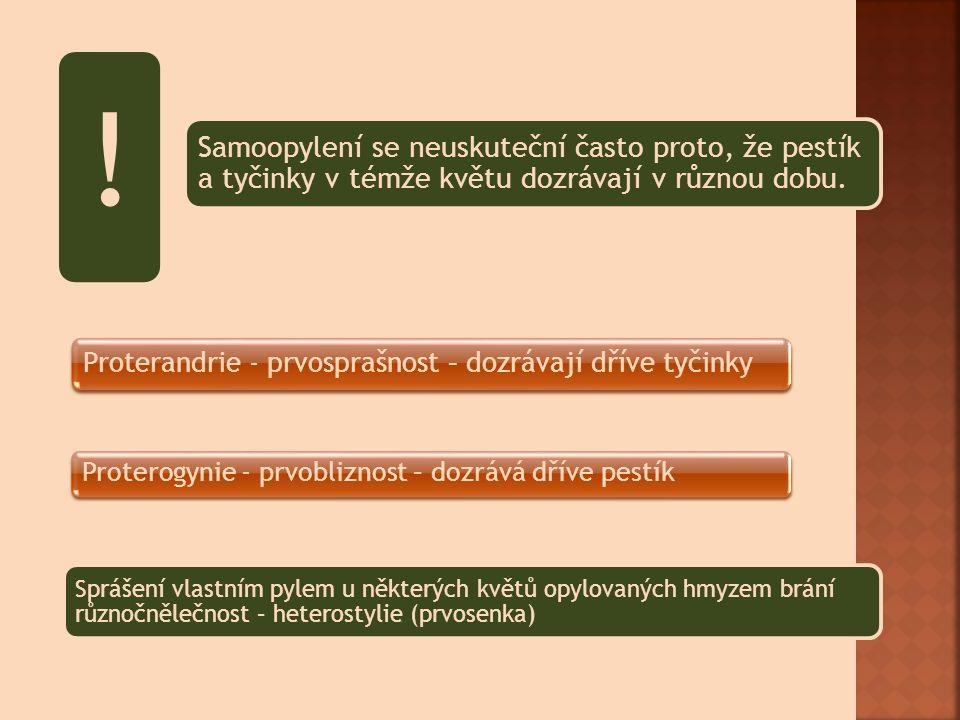 ! Proterogynie - prvobliznost – dozrává dříve pestík
