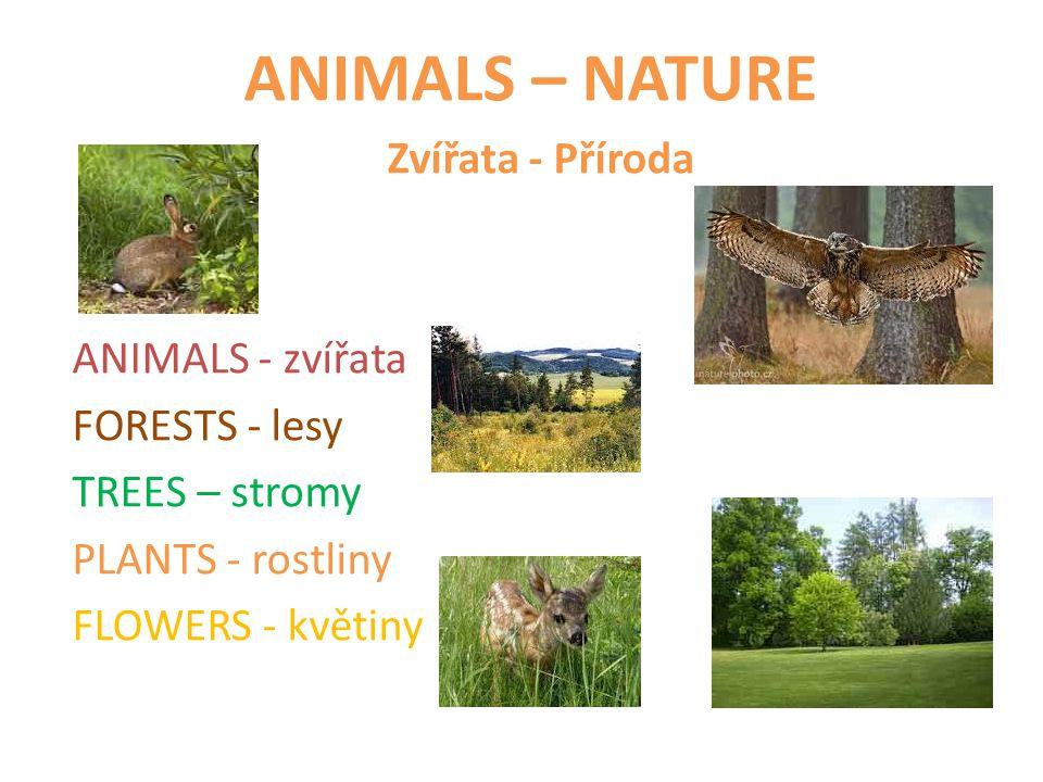 ANIMALS – NATURE Zvířata - Příroda ANIMALS - zvířata FORESTS - lesy