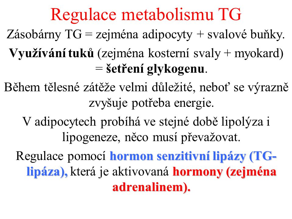 Regulace metabolismu TG