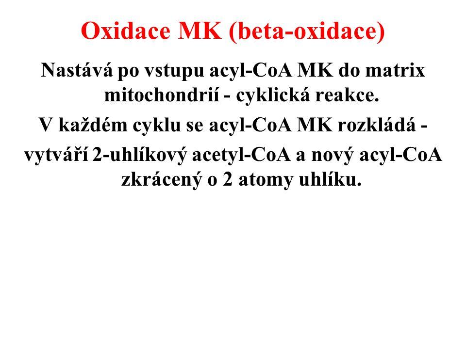 Oxidace MK (beta-oxidace)