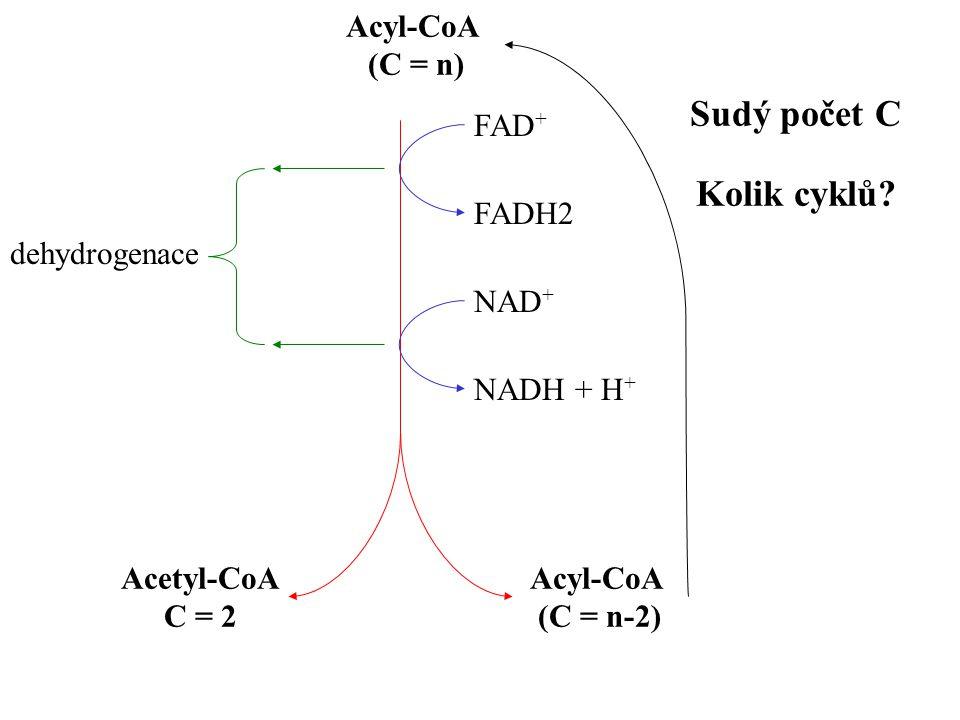 Sudý počet C Kolik cyklů