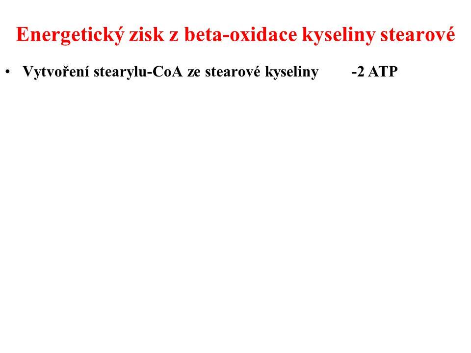 Energetický zisk z beta-oxidace kyseliny stearové