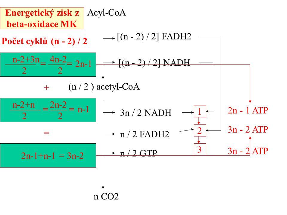 Energetický zisk z beta-oxidace MK