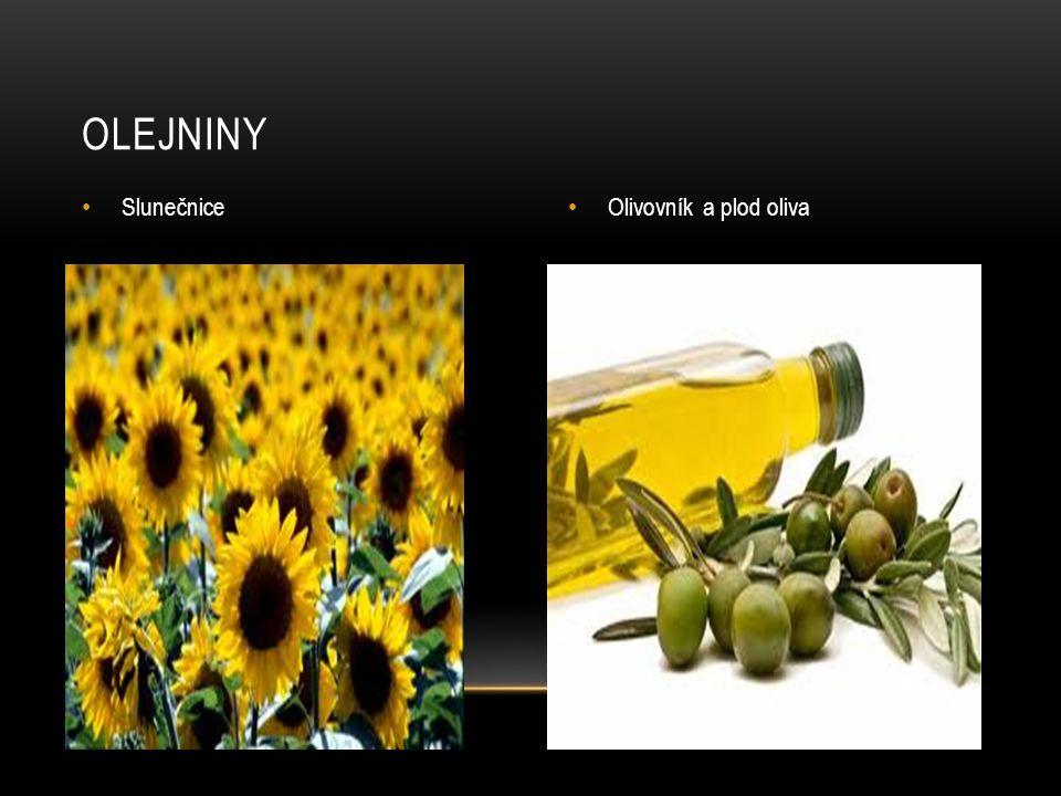 OLEJNINY Slunečnice Olivovník a plod oliva